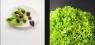 snails-plate-lettuce